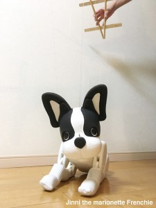 Jinni the Marionette Frenchie